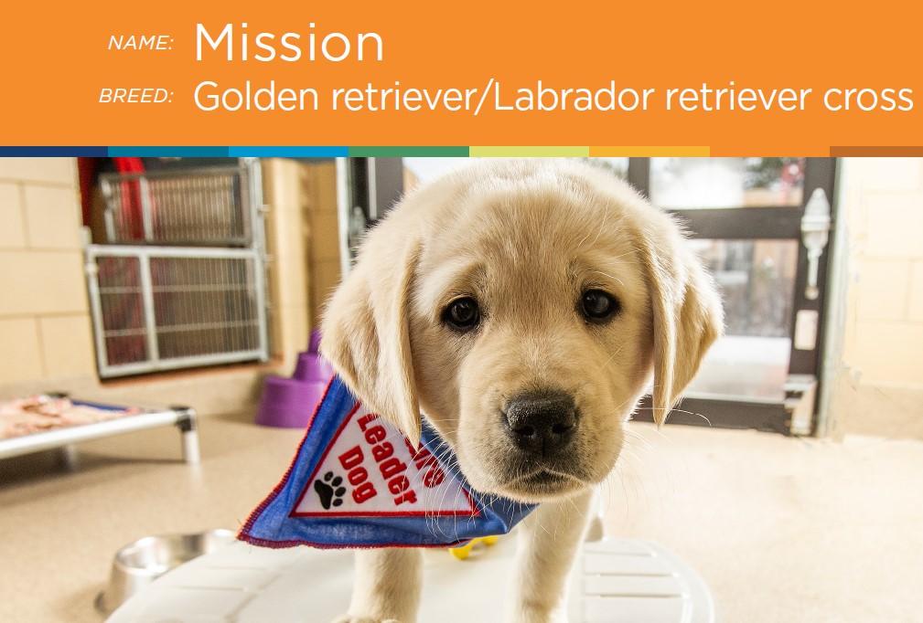 Meet Mission
